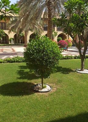 MAHMOUD AWWAD LANDSCAPE DESIGNER UAE-Dubai