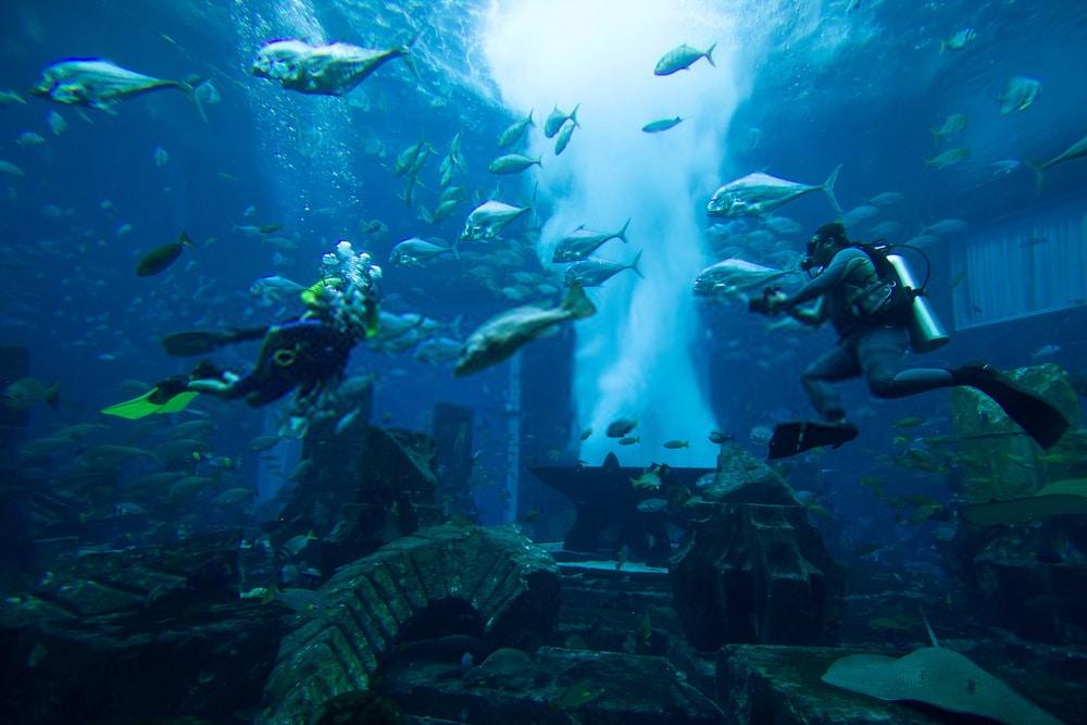outdoor activities in dubai Scuba Diving in dubai
